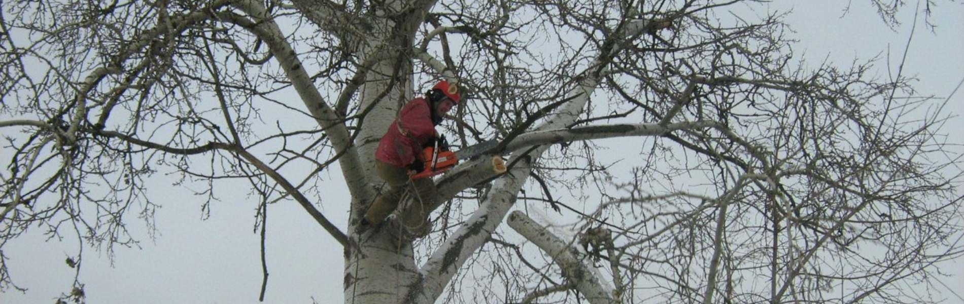 Обрезка аварийных деревьев Хмельницкий